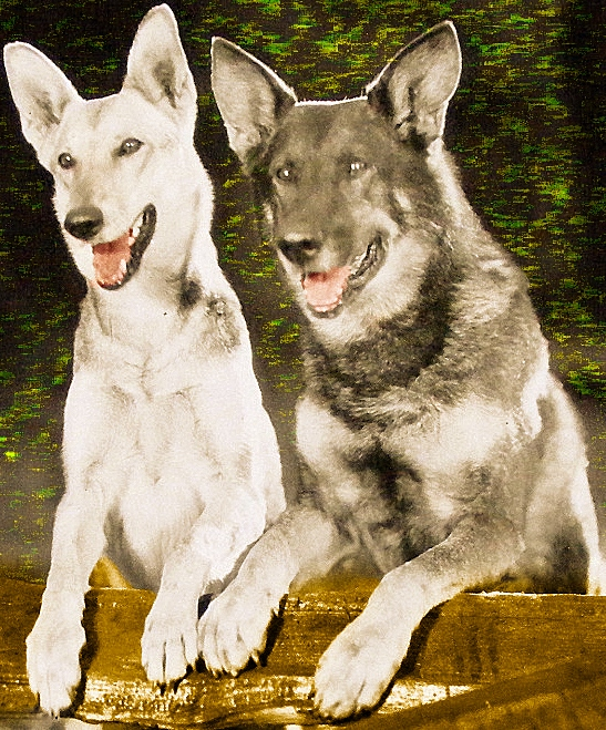 Tracked by the Police Nanette and Rin Tin Tin