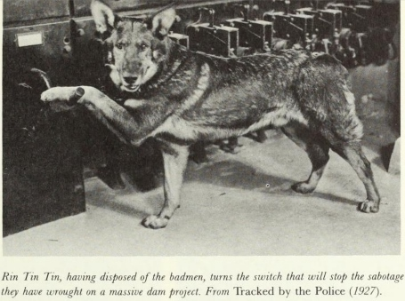 Tracked by the Police Rin Tin Tin  photo and description from The Western, From Silents to Cinerama By George N. Fenin and William K. Everson, The Orion Press, New York, 1962